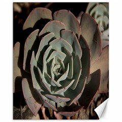 Succulent Green Pink Rosettes Canvas 16  X 20   by Sapixe