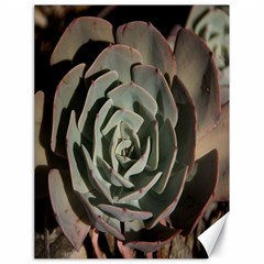 Succulent Green Pink Rosettes Canvas 18  X 24   by Sapixe