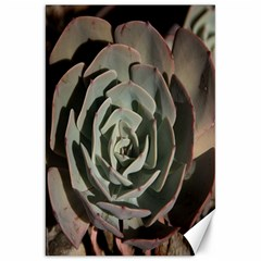 Succulent Green Pink Rosettes Canvas 20  X 30   by Sapixe