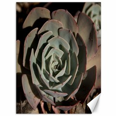 Succulent Green Pink Rosettes Canvas 36  X 48   by Sapixe