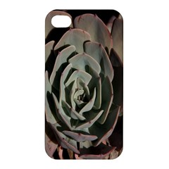 Succulent Green Pink Rosettes Apple Iphone 4/4s Hardshell Case