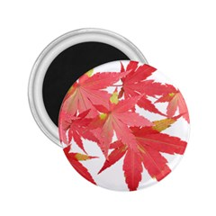 Leaves Maple Branch Autumn Fall 2 25  Magnets by Sapixe