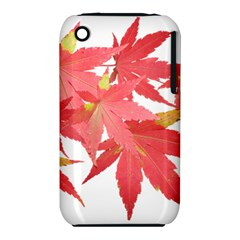 Leaves Maple Branch Autumn Fall Iphone 3s/3gs by Sapixe