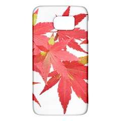 Leaves Maple Branch Autumn Fall Galaxy S6 by Sapixe