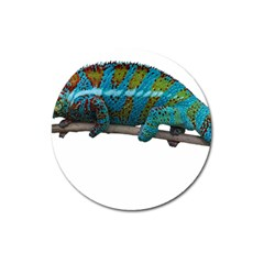 Reptile Lizard Animal Isolated Magnet 3  (round) by Sapixe
