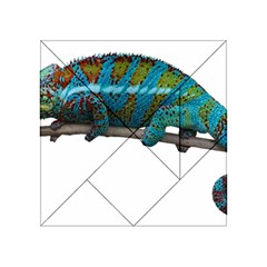 Reptile Lizard Animal Isolated Acrylic Tangram Puzzle (4  X 4 ) by Sapixe