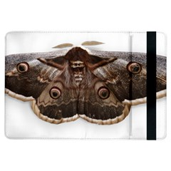 Night Butterfly Butterfly Giant Ipad Air Flip by Sapixe