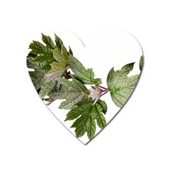 Leaves Plant Branch Nature Foliage Heart Magnet
