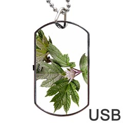 Leaves Plant Branch Nature Foliage Dog Tag Usb Flash (two Sides) by Sapixe