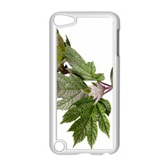 Leaves Plant Branch Nature Foliage Apple Ipod Touch 5 Case (white) by Sapixe