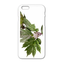 Leaves Plant Branch Nature Foliage Apple Iphone 6/6s White Enamel Case by Sapixe