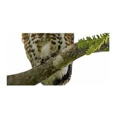 Owl Bird Satin Wrap