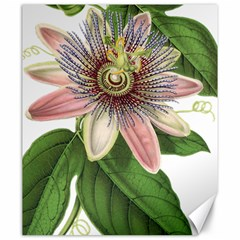 Passion Flower Flower Plant Blossom Canvas 20  X 24   by Sapixe