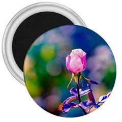 Pink Rose Flower 3  Magnets