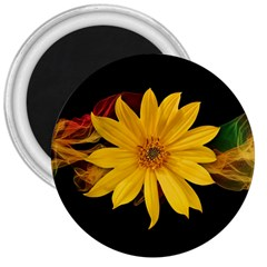 Sun Flower Blossom Bloom Particles 3  Magnets
