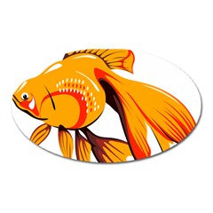 Goldfish Fish Tank Water Tropical Oval Magnet