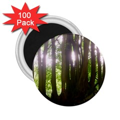 Tree Of Trees 2 25  Magnets (100 Pack)  by DeneWestUK
