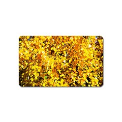 Birch Tree Yellow Leaves Magnet (name Card) by FunnyCow