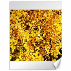 Birch Tree Yellow Leaves Canvas 36  X 48