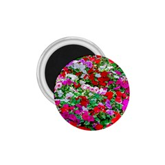 Colorful Petunia Flowers 1 75  Magnets