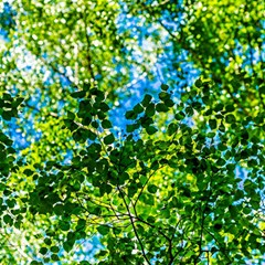 Forest   Strain Towards The Light Magic Photo Cubes
