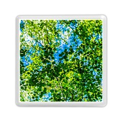Forest   Strain Towards The Light Memory Card Reader (square)