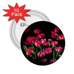 Pink Tulips Dark Background 2 25  Buttons (10 Pack)