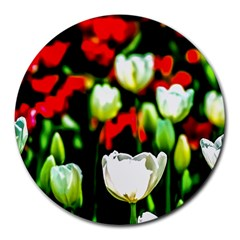 White And Red Sunlit Tulips Round Mousepads