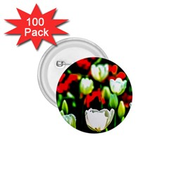 White And Red Sunlit Tulips 1 75  Buttons (100 Pack)