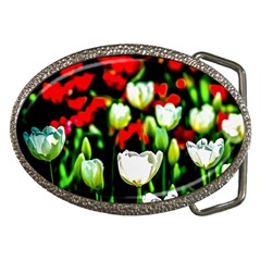 White And Red Sunlit Tulips Belt Buckles