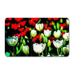 White And Red Sunlit Tulips Magnet (rectangular)