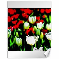 White And Red Sunlit Tulips Canvas 18  X 24   by FunnyCow