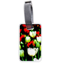 White And Red Sunlit Tulips Luggage Tags (one Side)