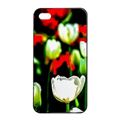 White And Red Sunlit Tulips Apple Iphone 4/4s Seamless Case (black) by FunnyCow