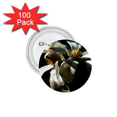Two White Magnolia Flowers 1 75  Buttons (100 Pack)  by FunnyCow