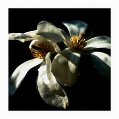 Two White Magnolia Flowers Medium Glasses Cloth