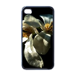 Two White Magnolia Flowers Apple Iphone 4 Case (black)