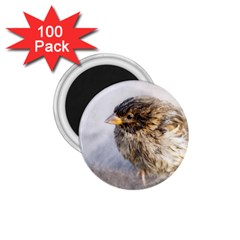Funny Wet Sparrow Bird 1 75  Magnets (100 Pack)