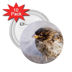 Funny Wet Sparrow Bird 2 25  Buttons (10 Pack)