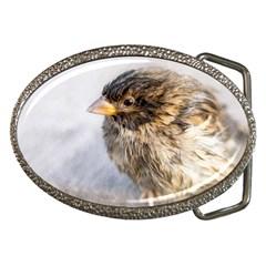 Funny Wet Sparrow Bird Belt Buckles