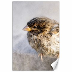Funny Wet Sparrow Bird Canvas 20  X 30   by FunnyCow