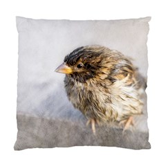 Funny Wet Sparrow Bird Standard Cushion Case (one Side)