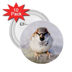 Do Not Mess With Sparrows 2 25  Buttons (10 Pack)