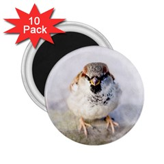 Do Not Mess With Sparrows 2 25  Magnets (10 Pack)