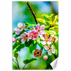 Crab Apple Flowers Canvas 24  X 36