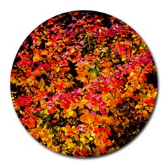 Orange, Yellow Cotoneaster Leaves In Autumn Round Mousepads by FunnyCow