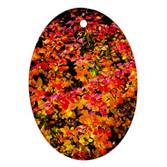 Orange, Yellow Cotoneaster Leaves In Autumn Ornament (oval) by FunnyCow