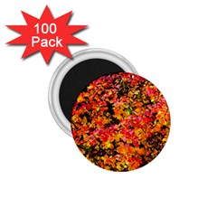 Orange, Yellow Cotoneaster Leaves In Autumn 1 75  Magnets (100 Pack)  by FunnyCow