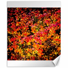 Orange, Yellow Cotoneaster Leaves In Autumn Canvas 16  X 20