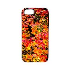 Orange, Yellow Cotoneaster Leaves In Autumn Apple Iphone 5 Classic Hardshell Case (pc+silicone) by FunnyCow